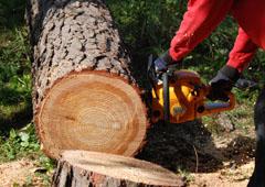Přípravu palivového dřeva usnadní farmářky